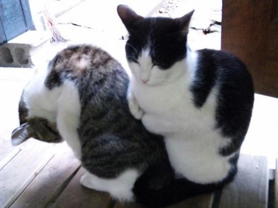 骨盤矯正で猫背改善できる理由 申し訳ありません。ウソをついていました。