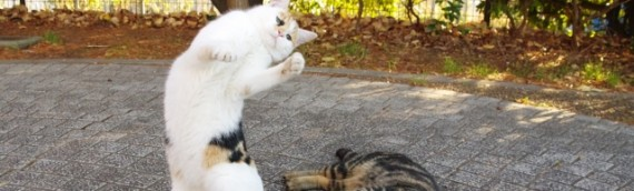 【警告】日本の猫背率はもはや国を滅ぼすレベルに達しているかも
