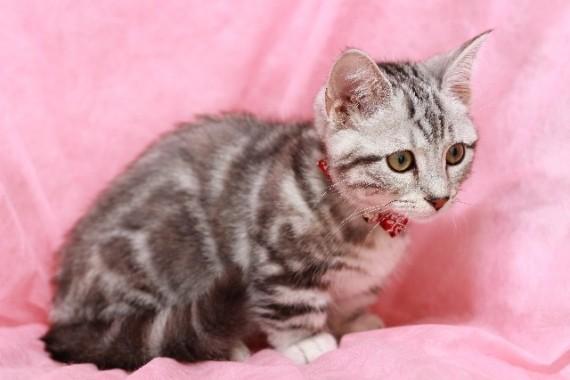 姿勢の美しさこそ若さの秘訣!猫背をとりあえず治しましょう