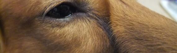 人間ドッグを受けるならこの3検査は外すな!あなたの健康を守る検査術