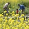 自分でできる花粉症対策!花粉をガードする6つの方法