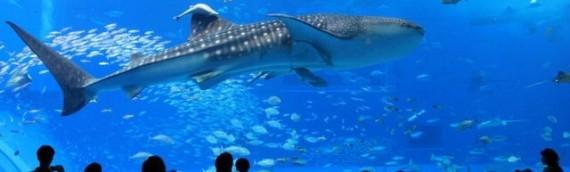 水族館でリラックス効果?ザリガニを飼い始めたけど熱帯魚も飼ってみようと思う