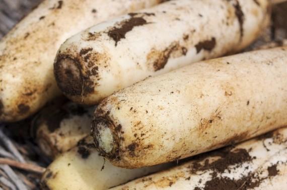 1000人の医師が選んだ冬に食べるべき野菜第1位は大根だった