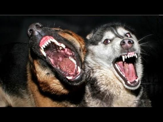 感染症専門医が選ぶ、最も怖いという狂犬病のリスクと対策