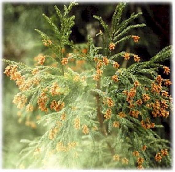花粉症と姿勢の歪みについての考察