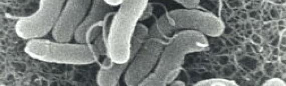 ピロリ菌が胃がんの発症原因になるかも?という事で感染経路や対策を調べました